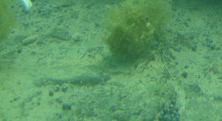 lead shot closeup 2011